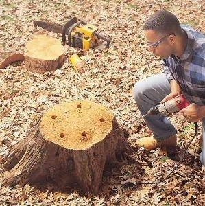 Chemical Stump Removal