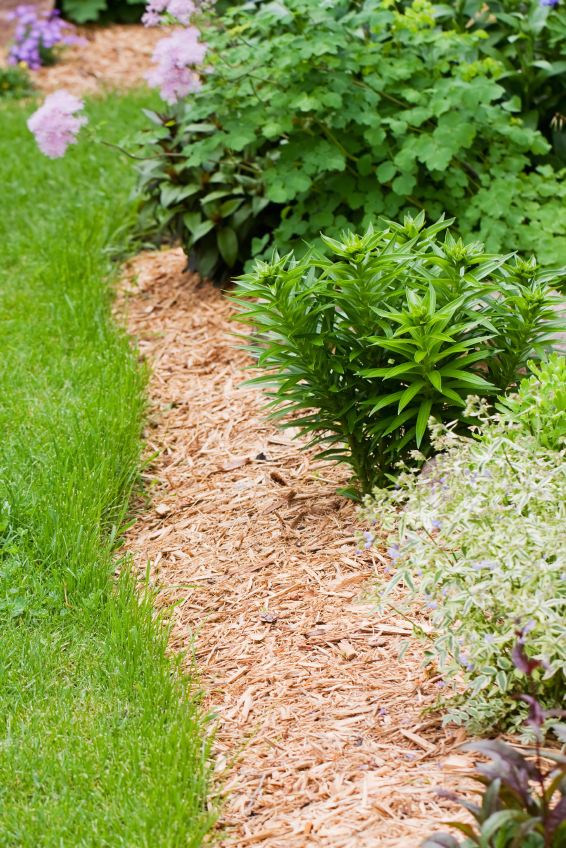 5 Ways To Use Wood Chips Dr S Country Life Blog