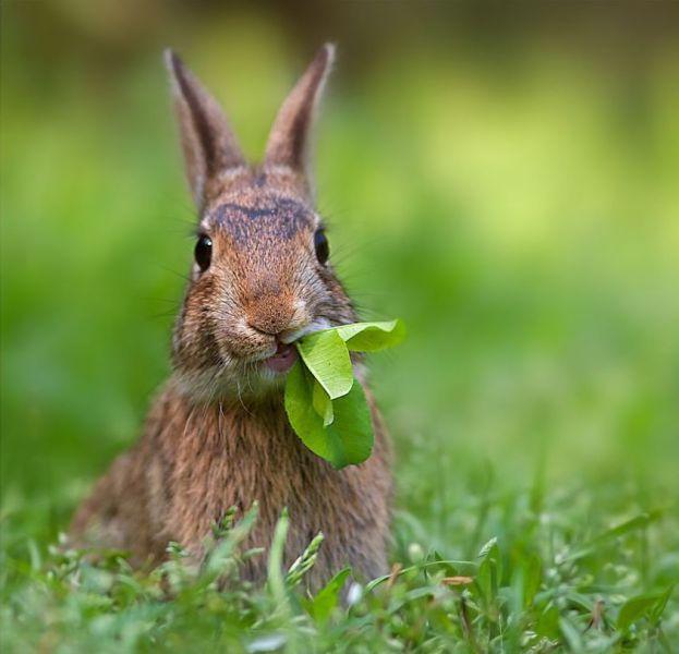 funny-bunny-25123