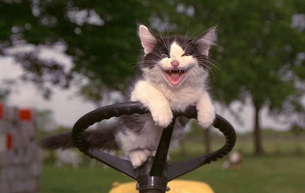mad-funny-cats-7